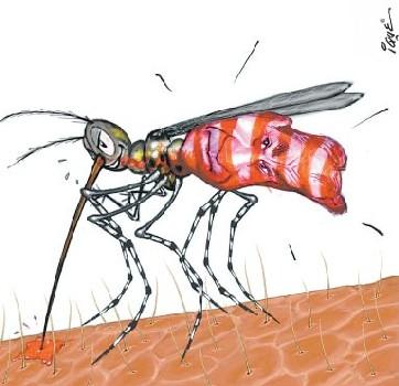 dengue-aedes1.jpg