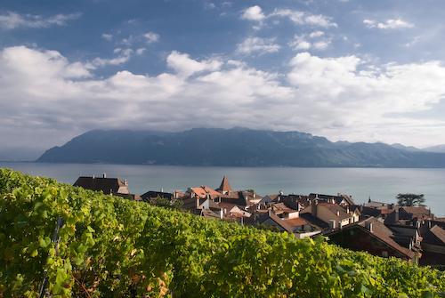 Viñas ( Suiza ).jpg