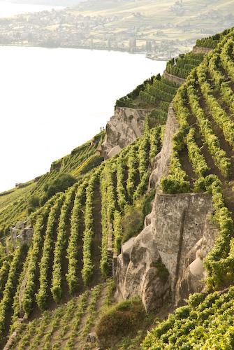 Lavaux ( Suiza ).jpg